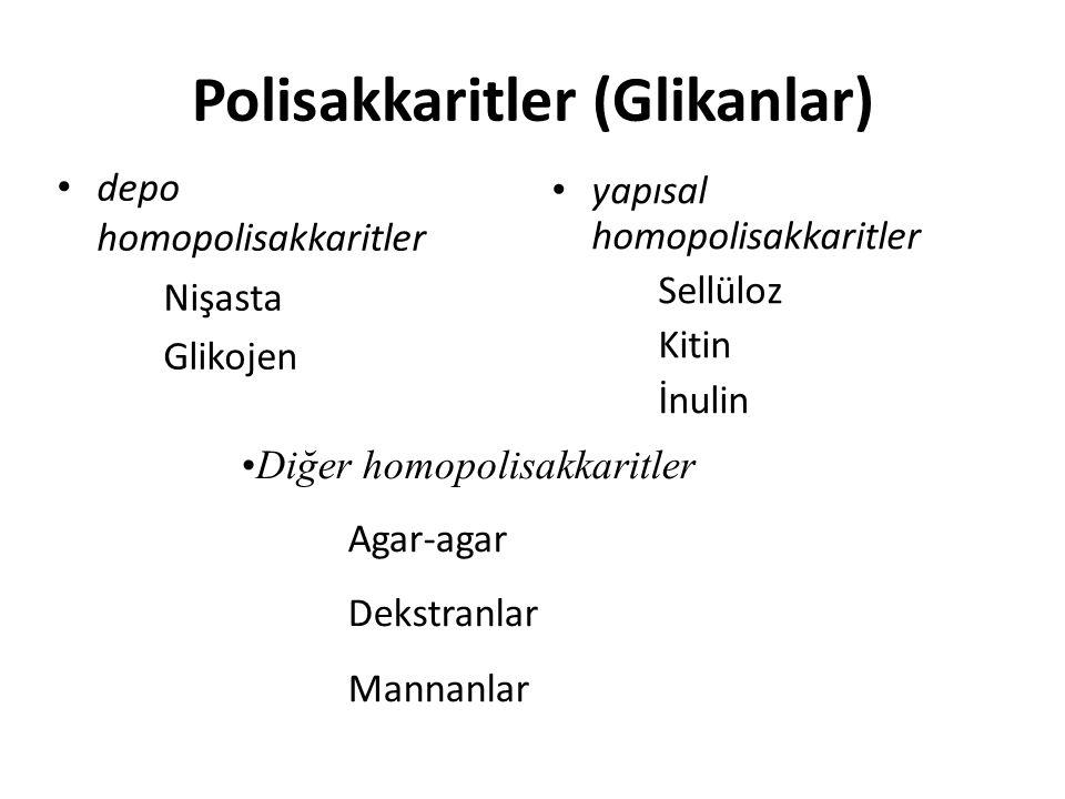 Polisakkaritler (Glikanlar)