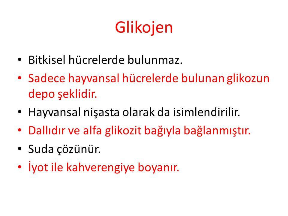 Glikojen Bitkisel hücrelerde bulunmaz.