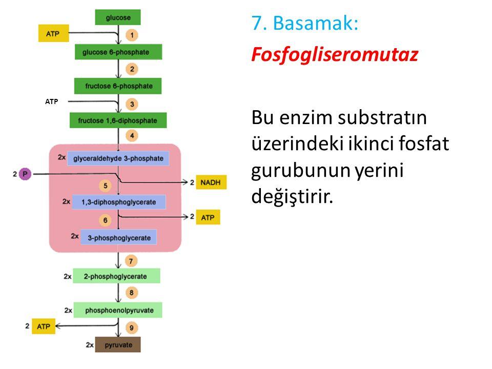 7. Basamak: Fosfogliseromutaz Bu enzim substratın üzerindeki ikinci fosfat gurubunun yerini değiştirir.