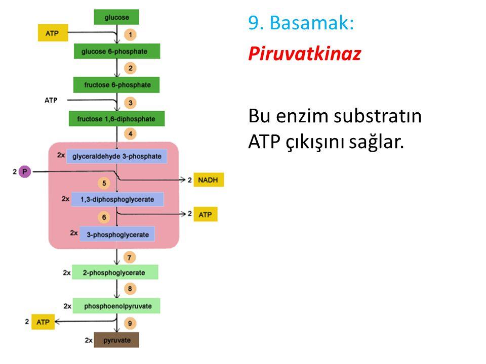 9. Basamak: Piruvatkinaz Bu enzim substratın ATP çıkışını sağlar.