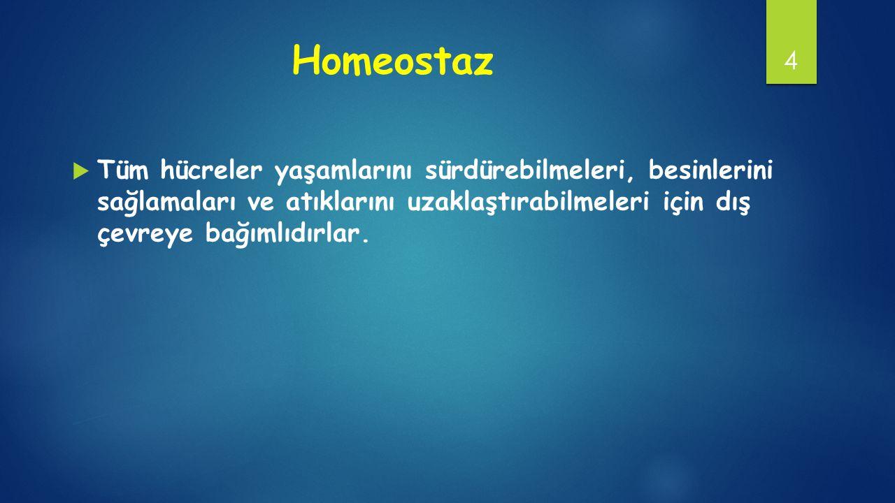 Homeostaz Tüm hücreler yaşamlarını sürdürebilmeleri, besinlerini sağlamaları ve atıklarını uzaklaştırabilmeleri için dış çevreye bağımlıdırlar.