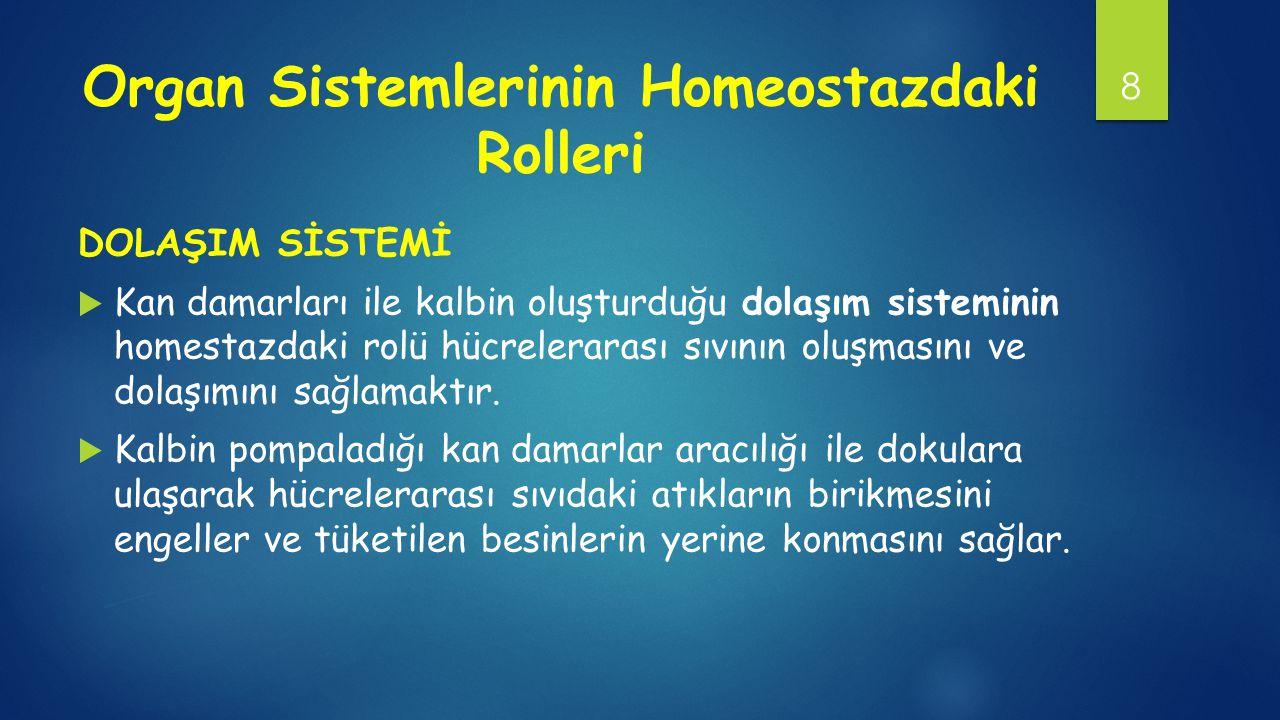 Organ Sistemlerinin Homeostazdaki Rolleri