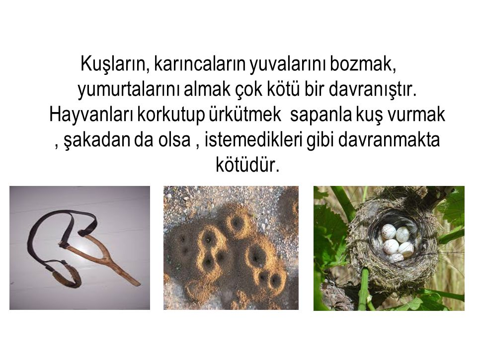 Kuşların, karıncaların yuvalarını bozmak, yumurtalarını almak çok kötü bir davranıştır.