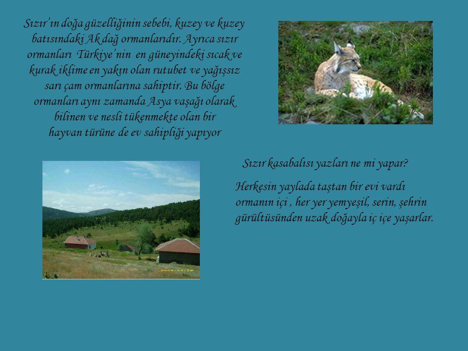 Sızır'ın doğa güzelliğinin sebebi, kuzey ve kuzey batısındaki Ak dağ ormanlarıdır. Ayrıca sızır ormanları Türkiye'nin en güneyindeki sıcak ve kurak iklime en yakın olan rutubet ve yağışsız sarı çam ormanlarına sahiptir. Bu bölge ormanları aynı zamanda Asya vaşağı olarak bilinen ve nesli tükenmekte olan bir hayvan türüne de ev sahipliği yapıyor