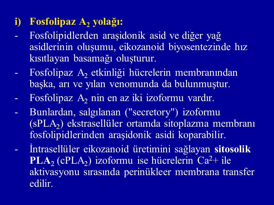 Fosfolipaz A2 yolağı: Fosfolipidlerden araşidonik asid ve diğer yağ asidlerinin oluşumu, eikozanoid biyosentezinde hız kısıtlayan basamağı oluşturur.