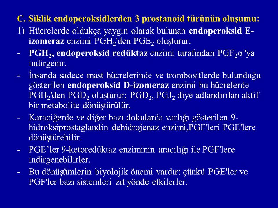 C. Siklik endoperoksidlerden 3 prostanoid türünün oluşumu: