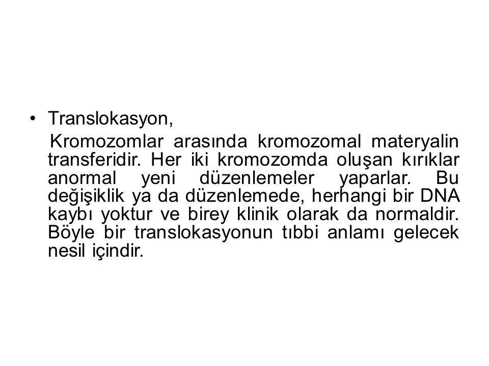 Translokasyon,