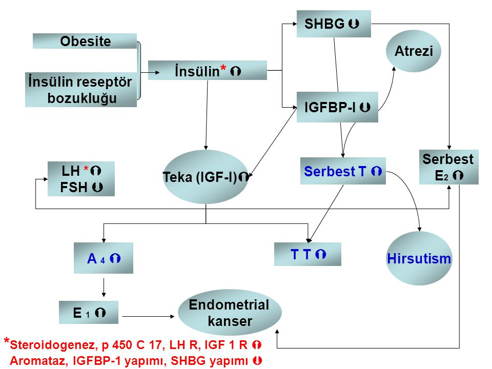 *Steroidogenez, p 450 C 17, LH R, IGF 1 R 