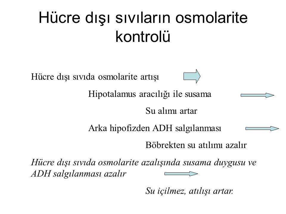 Hücre dışı sıvıların osmolarite kontrolü