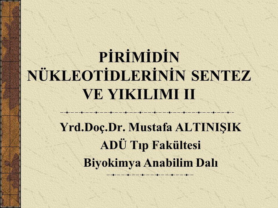 PİRİMİDİN NÜKLEOTİDLERİNİN SENTEZ VE YIKILIMI II