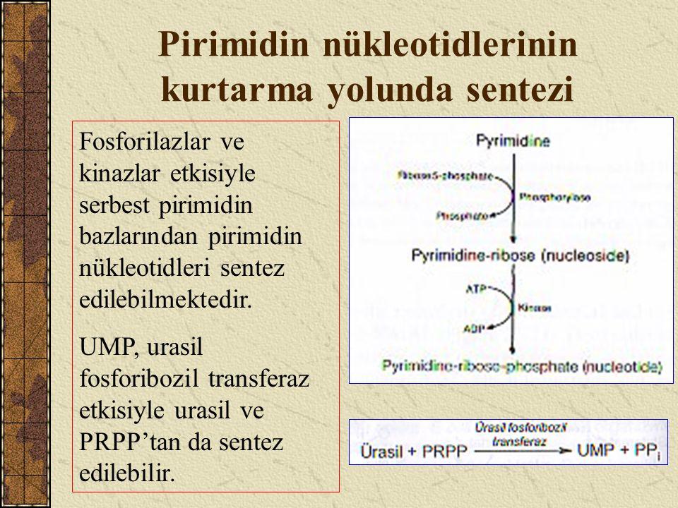 Pirimidin nükleotidlerinin kurtarma yolunda sentezi