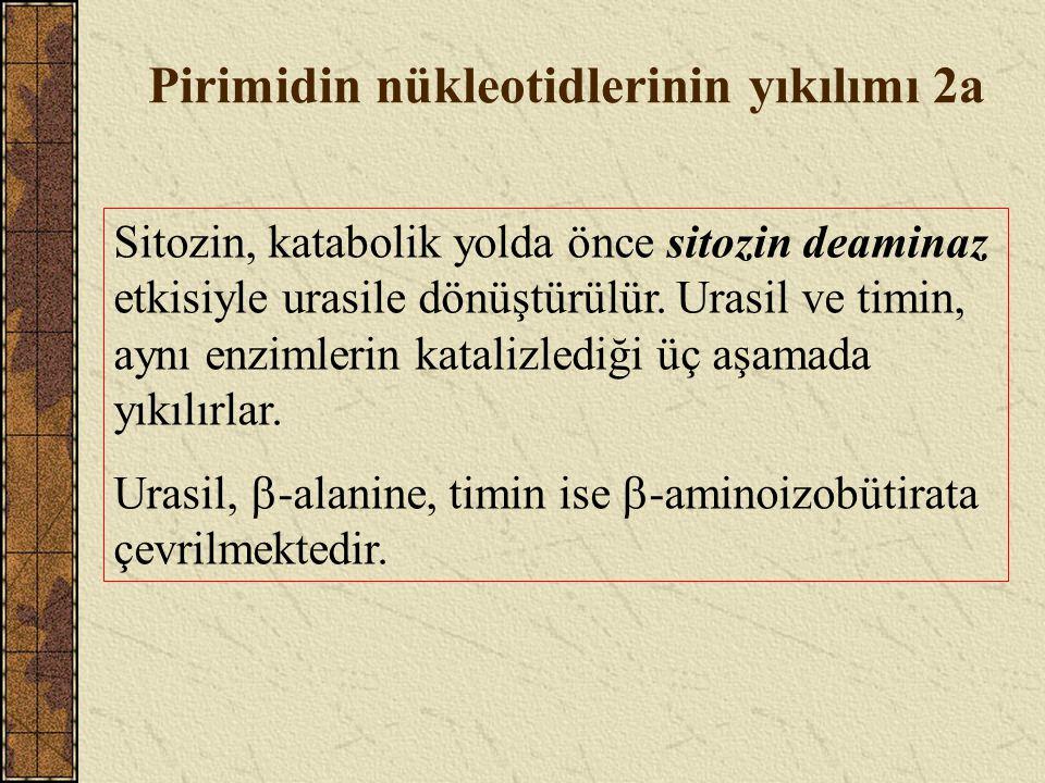 Pirimidin nükleotidlerinin yıkılımı 2a