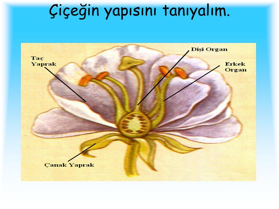 Çiçeğin yapısını tanıyalım.