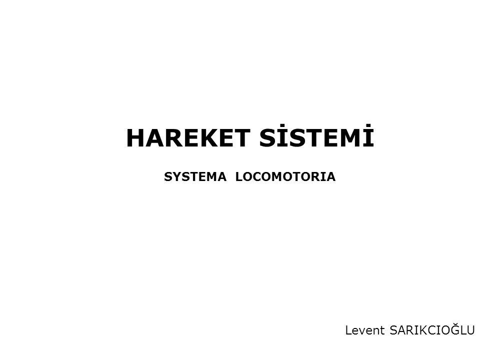HAREKET SİSTEMİ SYSTEMA LOCOMOTORIA Levent SARIKCIOĞLU