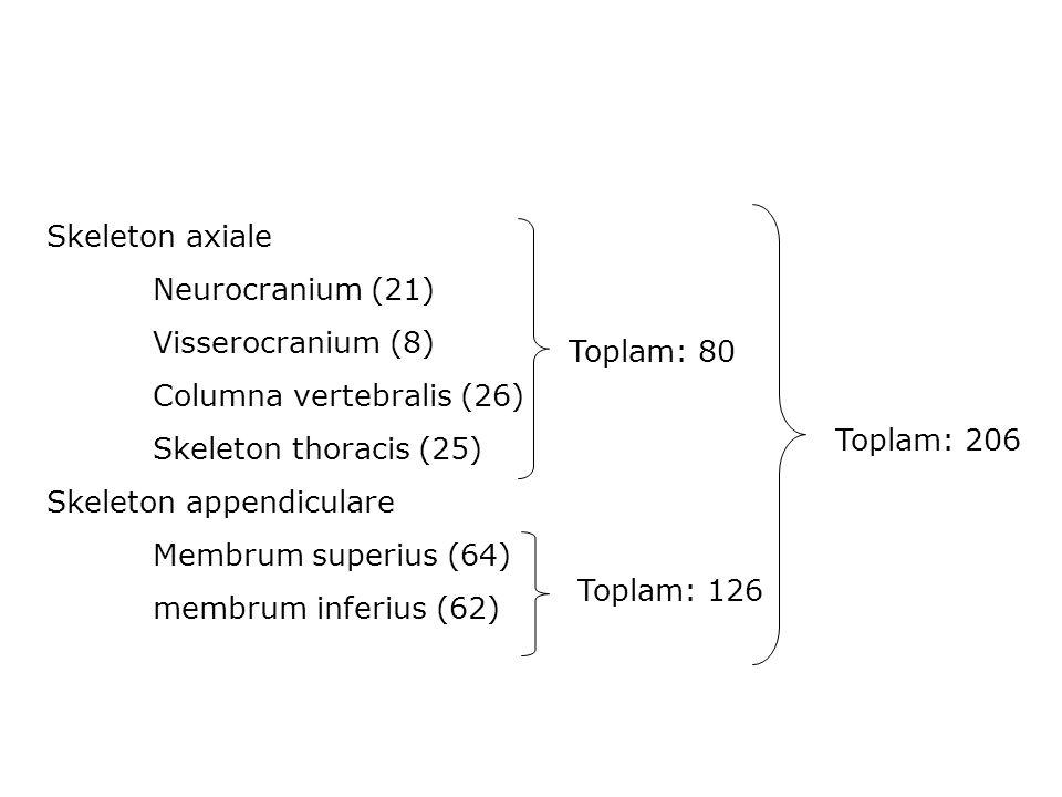 Skeleton axiale Neurocranium (21) Visserocranium (8) Columna vertebralis (26) Skeleton thoracis (25)