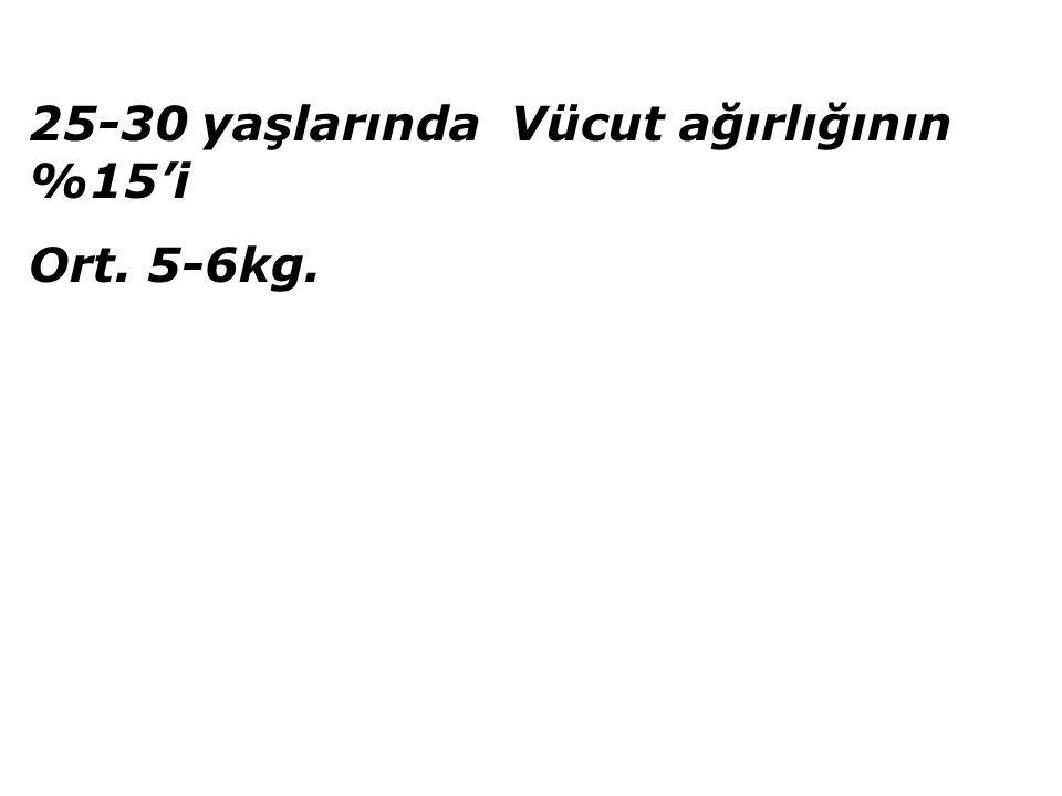 25-30 yaşlarında Vücut ağırlığının %15'i