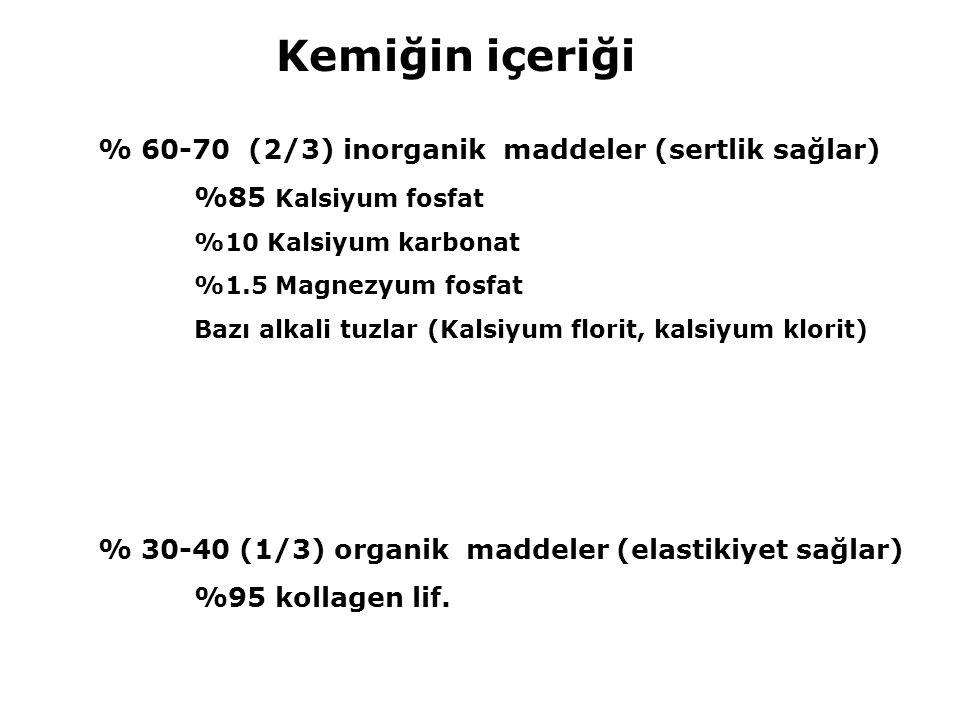 Kemiğin içeriği % 60-70 (2/3) inorganik maddeler (sertlik sağlar)