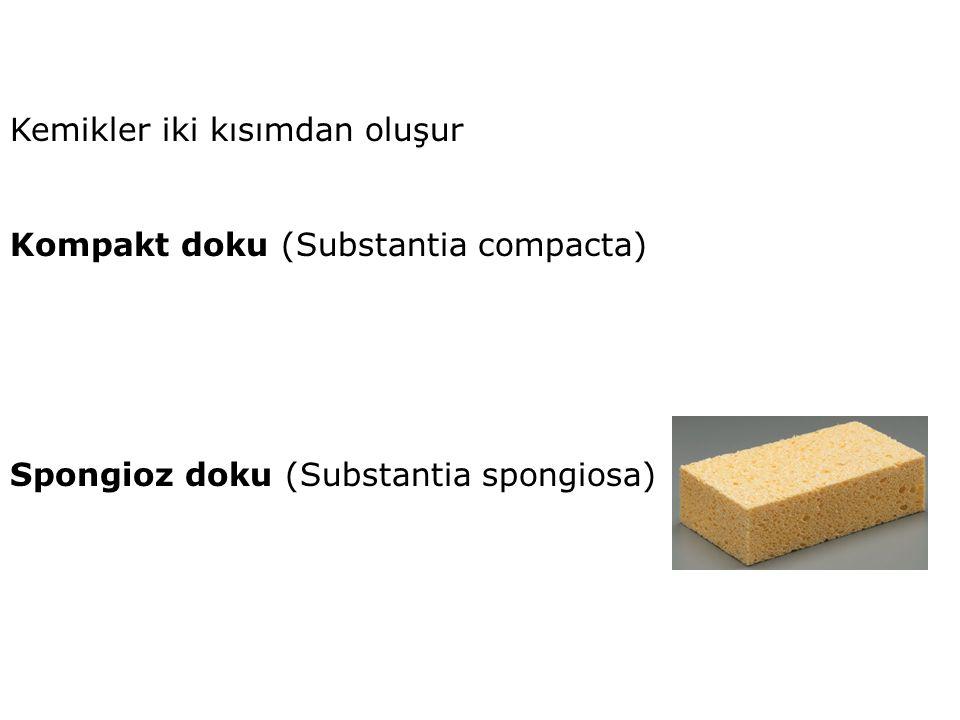 Kemikler iki kısımdan oluşur