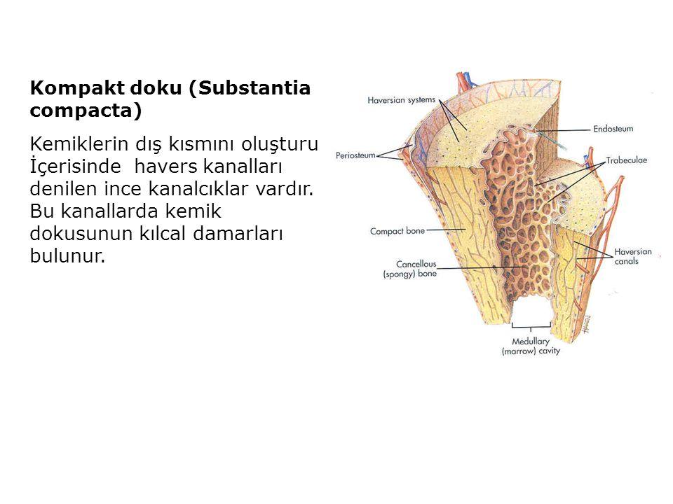 Kompakt doku (Substantia compacta)