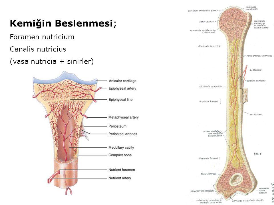 Kemiğin Beslenmesi; Foramen nutricium Canalis nutricius