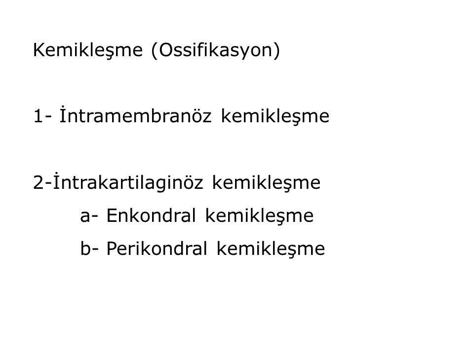 Kemikleşme (Ossifikasyon)
