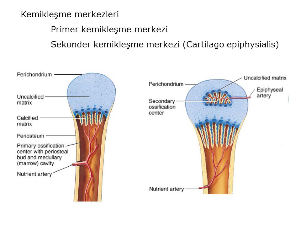 Kemikleşme merkezleri