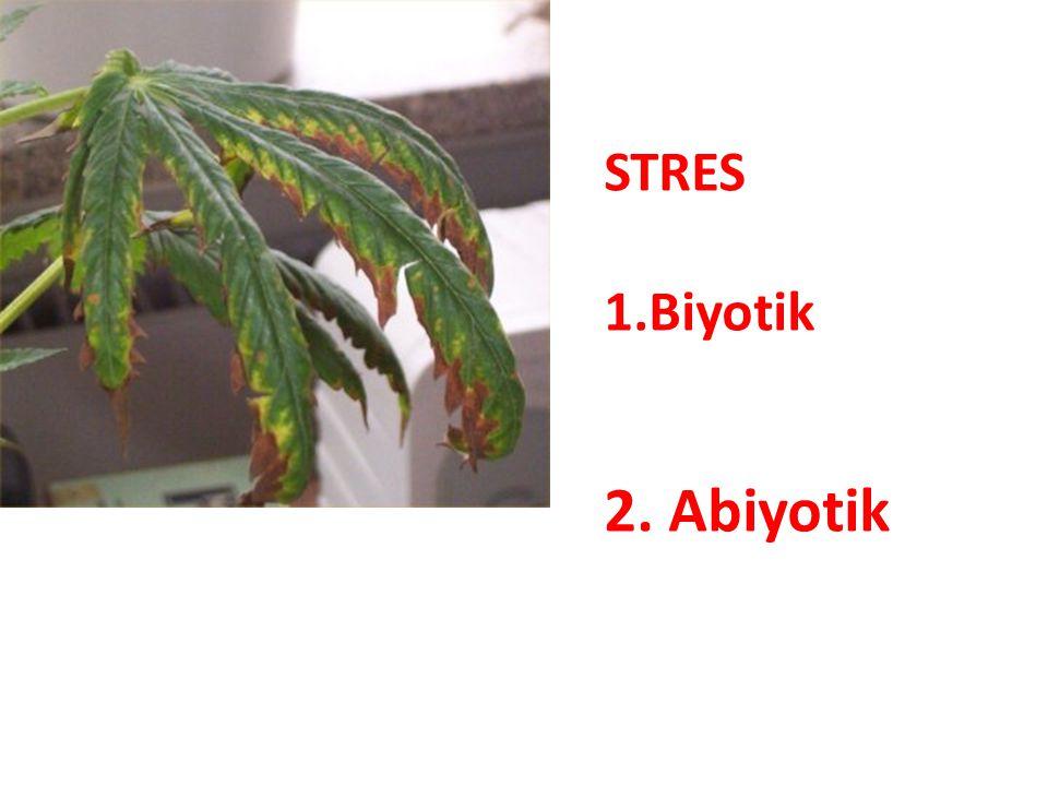 STRES Biyotik 2. Abiyotik