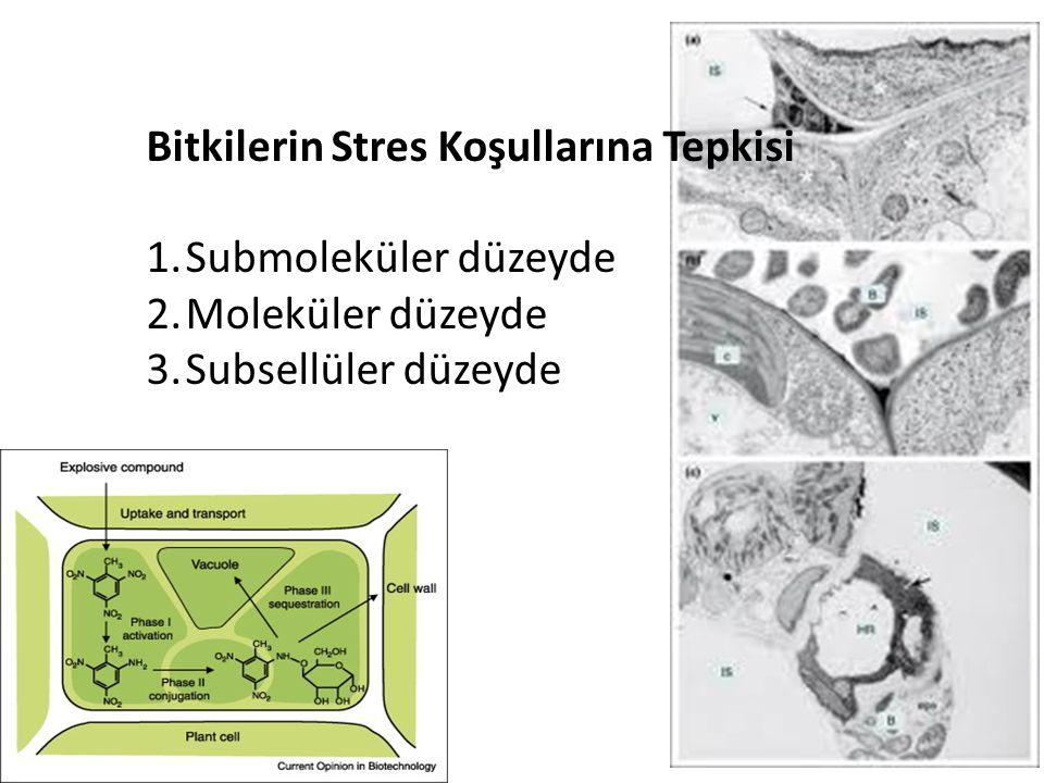 Bitkilerin Stres Koşullarına Tepkisi