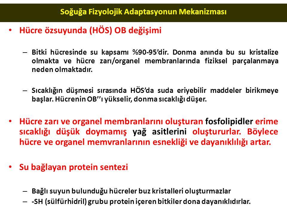 Soğuğa Fizyolojik Adaptasyonun Mekanizması