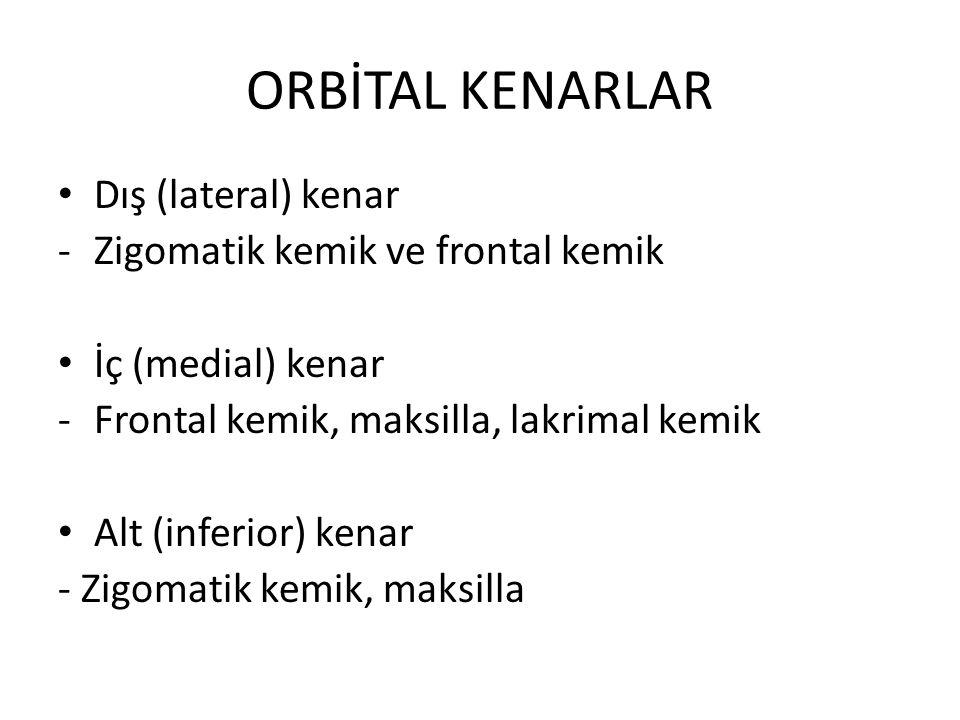ORBİTAL KENARLAR Dış (lateral) kenar Zigomatik kemik ve frontal kemik