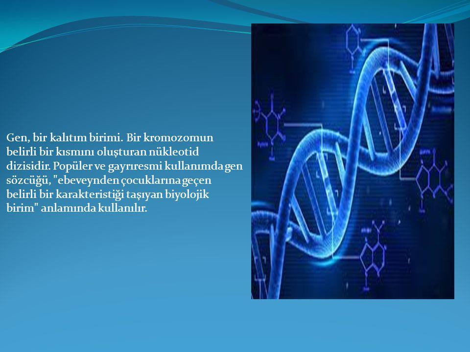 Gen, bir kalıtım birimi. Bir kromozomun belirli bir kısmını oluşturan nükleotid dizisidir.