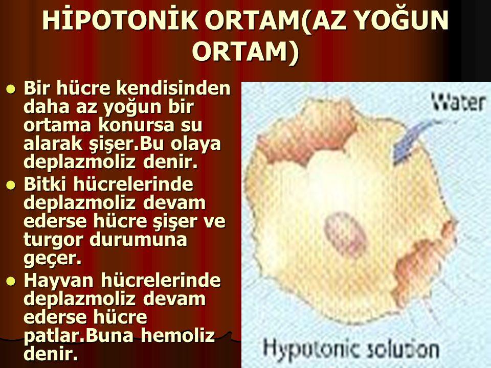 HİPOTONİK ORTAM(AZ YOĞUN ORTAM)