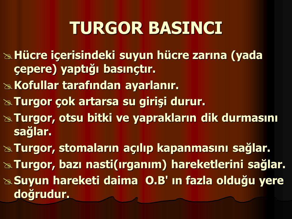 TURGOR BASINCI Hücre içerisindeki suyun hücre zarına (yada çepere) yaptığı basınçtır. Kofullar tarafından ayarlanır.