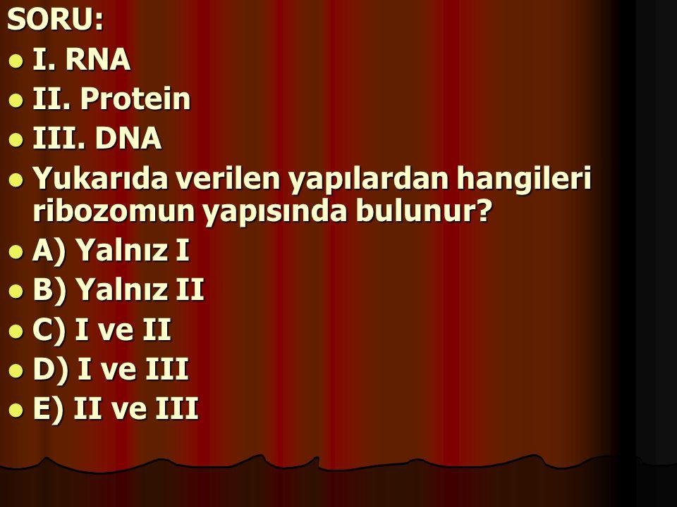 SORU: I. RNA. II. Protein. III. DNA. Yukarıda verilen yapılardan hangileri ribozomun yapısında bulunur
