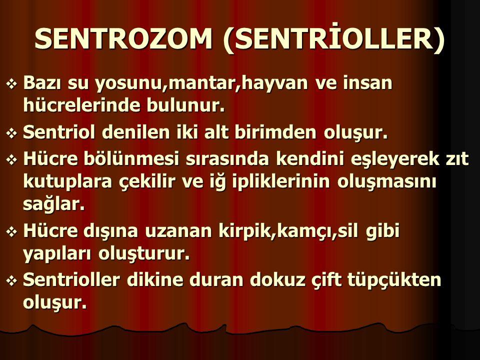 SENTROZOM (SENTRİOLLER)