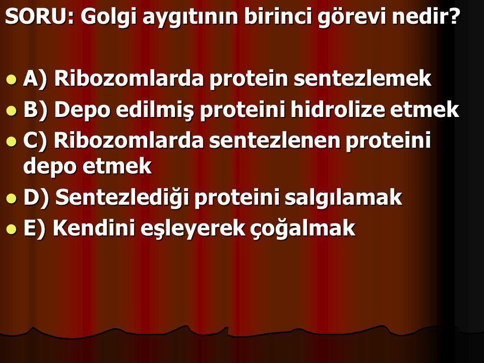 SORU: Golgi aygıtının birinci görevi nedir