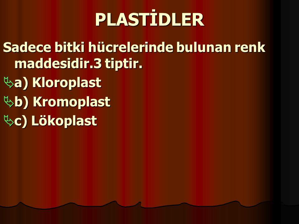 PLASTİDLER Sadece bitki hücrelerinde bulunan renk maddesidir.3 tiptir.