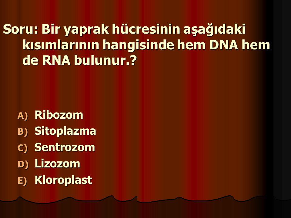 Soru: Bir yaprak hücresinin aşağıdaki kısımlarının hangisinde hem DNA hem de RNA bulunur.