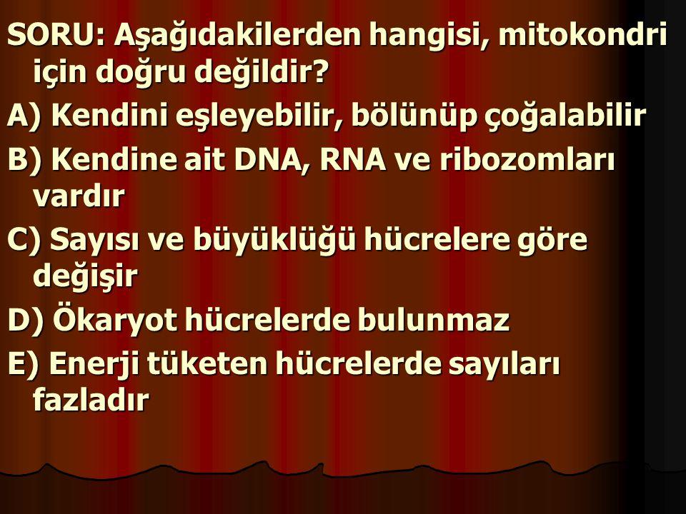 SORU: Aşağıdakilerden hangisi, mitokondri için doğru değildir