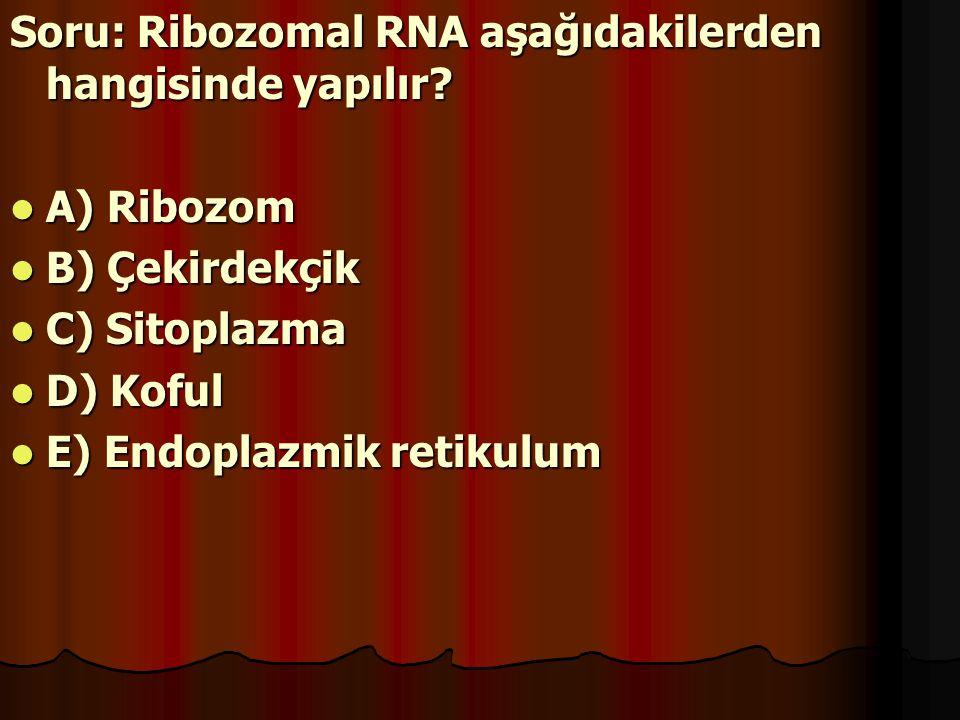 Soru: Ribozomal RNA aşağıdakilerden hangisinde yapılır