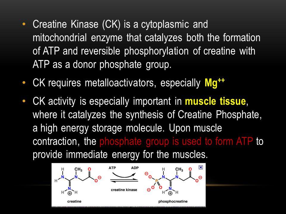 CK requires metalloactivators, especially Mg++