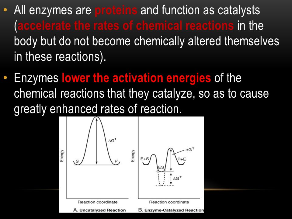 All enzymes are proteins and function as catalysts (accelerate the rates of chemical reactions in the body but do not become chemically altered themselves in these reactions).
