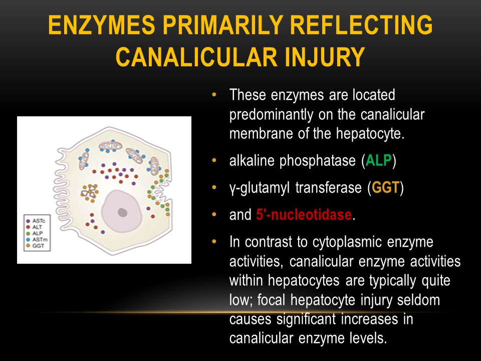 Enzymes Primarily Reflecting Canalicular Injury