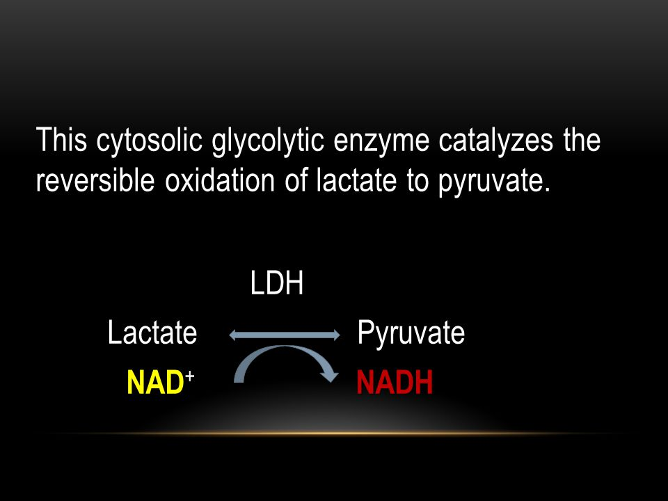 This cytosolic glycolytic enzyme catalyzes the reversible oxidation of lactate to pyruvate. LDH.