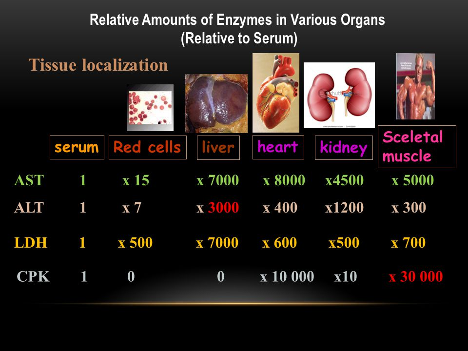 Relative Amounts of Enzymes in Various Organs