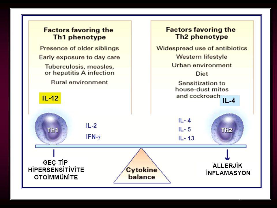 IL-12 IL-4 IL- 4 IL-2 IL- 5 IFN- IL- 13 GEÇ TİP HİPERSENSİTİVİTE