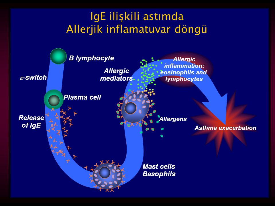 inflammation: eosinophils and lymphocytes