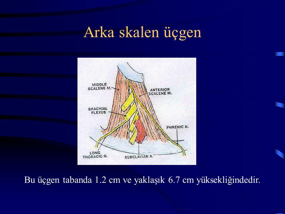 Arka skalen üçgen Bu üçgen tabanda 1.2 cm ve yaklaşık 6.7 cm yüksekliğindedir.