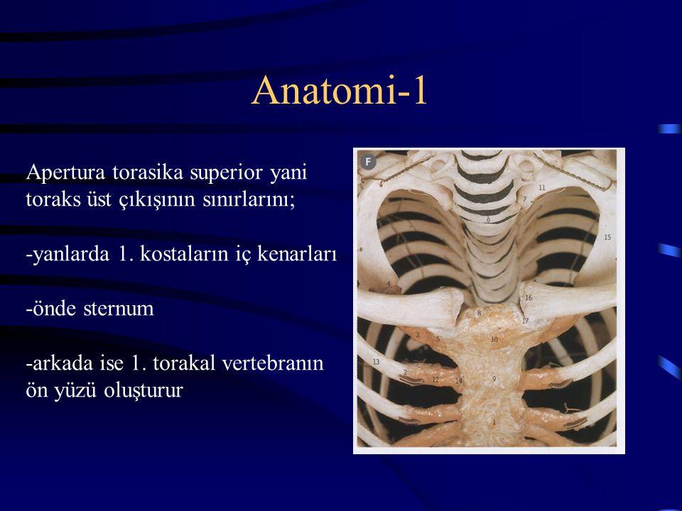 Anatomi-1 Apertura torasika superior yani toraks üst çıkışının sınırlarını; -yanlarda 1. kostaların iç kenarları.