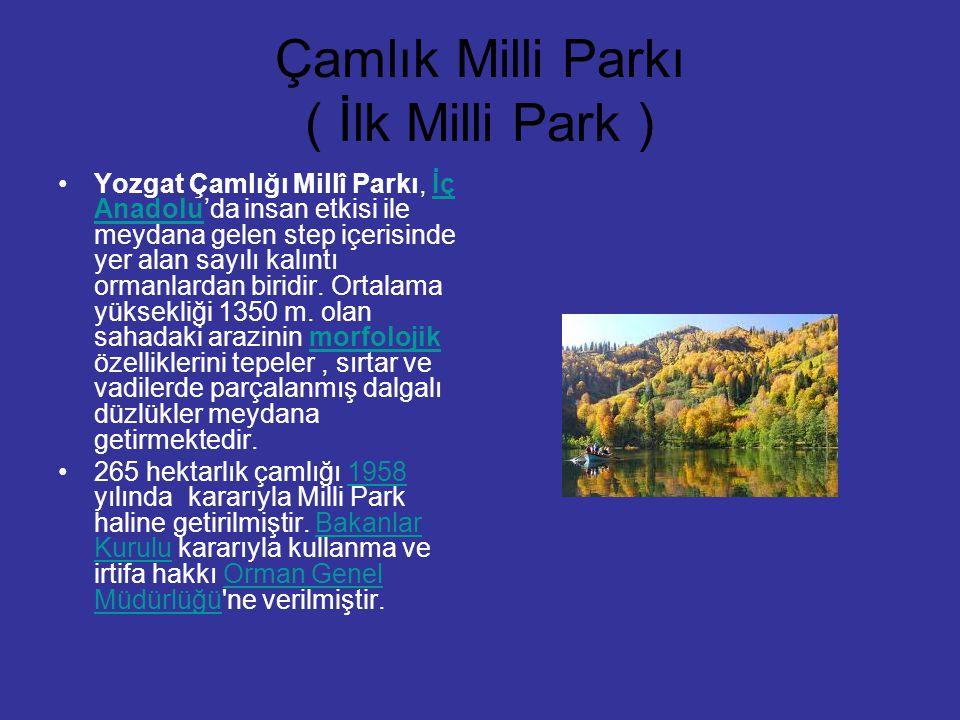 Çamlık Milli Parkı ( İlk Milli Park )